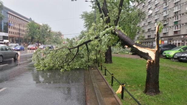 Drzewo upadło na jezdnię alei Jana Pawła II Artur Węgrzynowicz / tvnwarszawa.pl