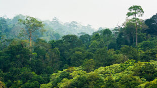 W ciągu ostatnich 20 lat odrodziły się lasy o powierzchni niemal dwukrotnie większej niż Polska
